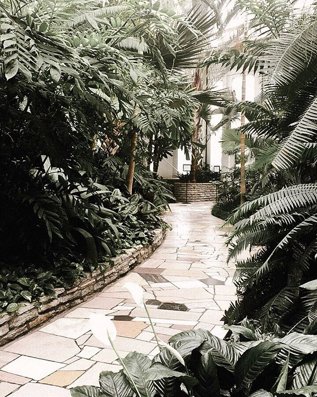 Walking through the conservatory is like going to the jungle minus the creepy crawlies. Plus you get to walk on a pretty paved path. 🐅 #mykindofjungle