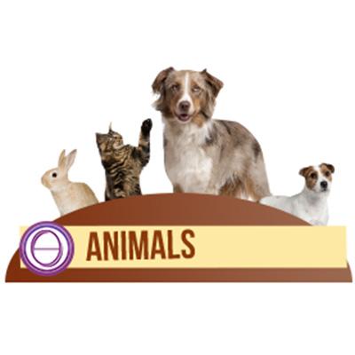 thetahealing-animals-400.jpg