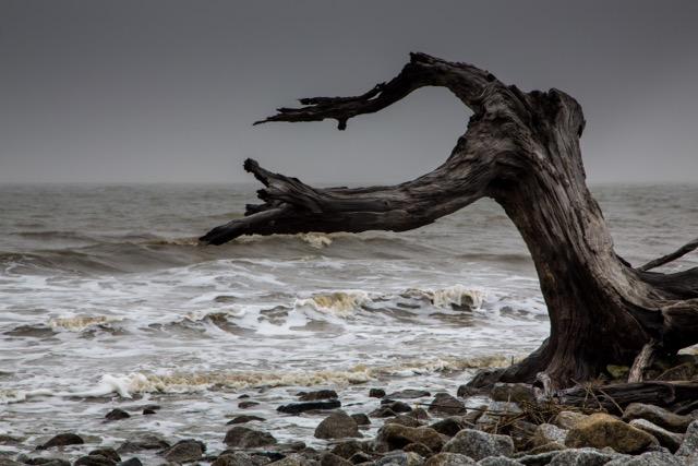 Driftwood Beach (1 of 1).jpeg