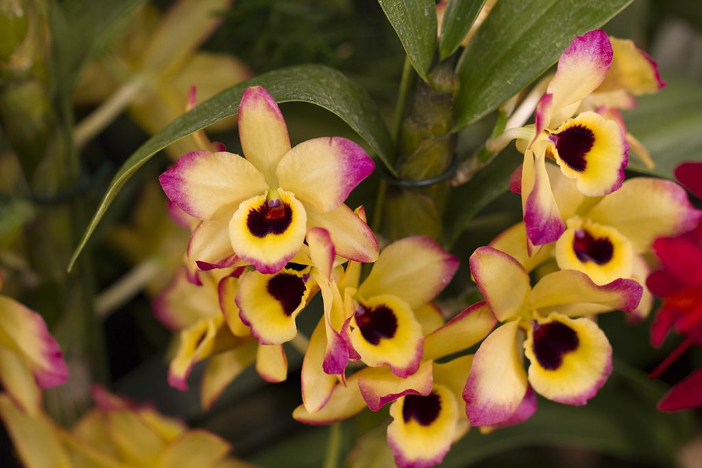 2Craig_Warren_Orchid Raw2.jpg