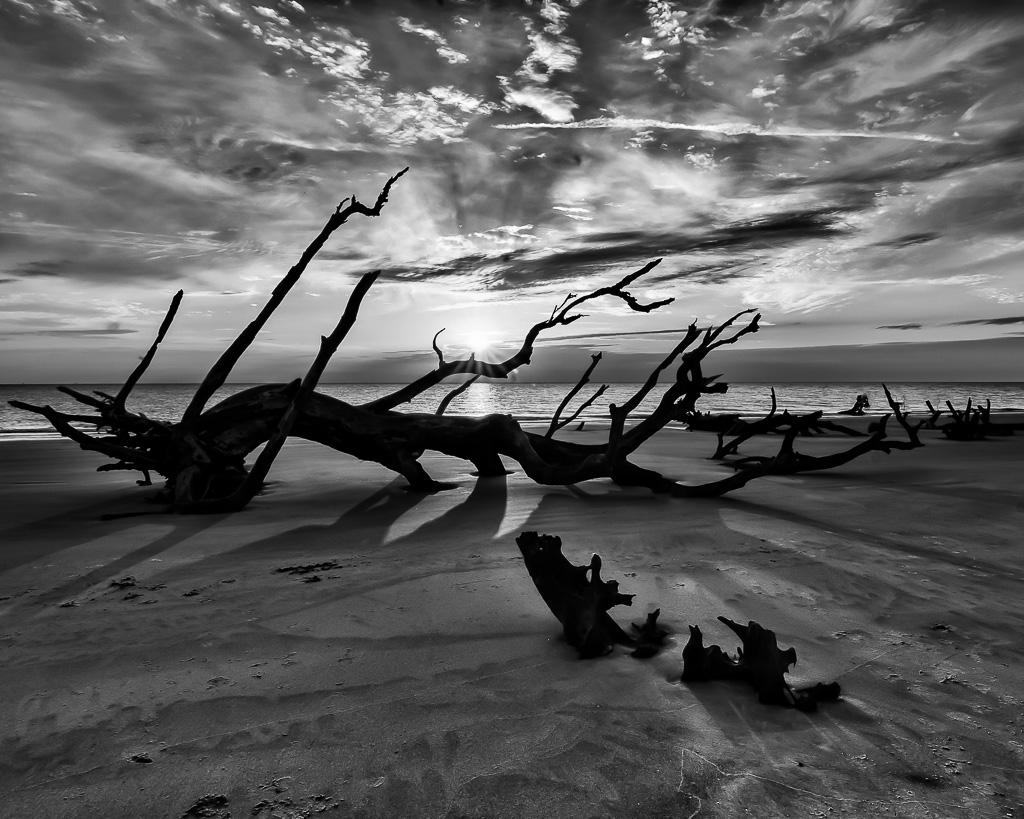 """""""Driftwood Beach"""" by Steve Kendall"""