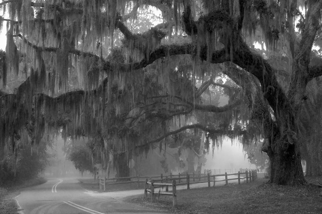 """""""A Road Not Taken"""" by Lynn Cates"""