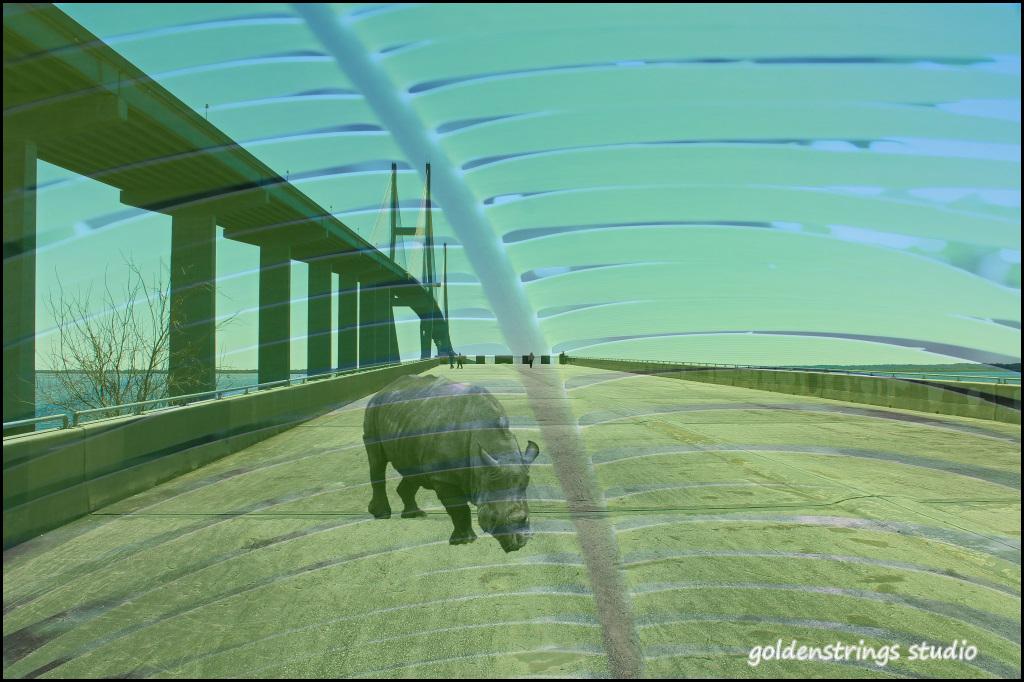15Jim_Patrick_Rhino Layers.jpg