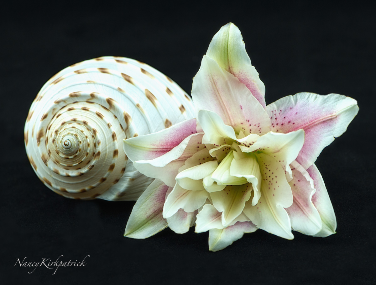 Lily-6139-8.jpg