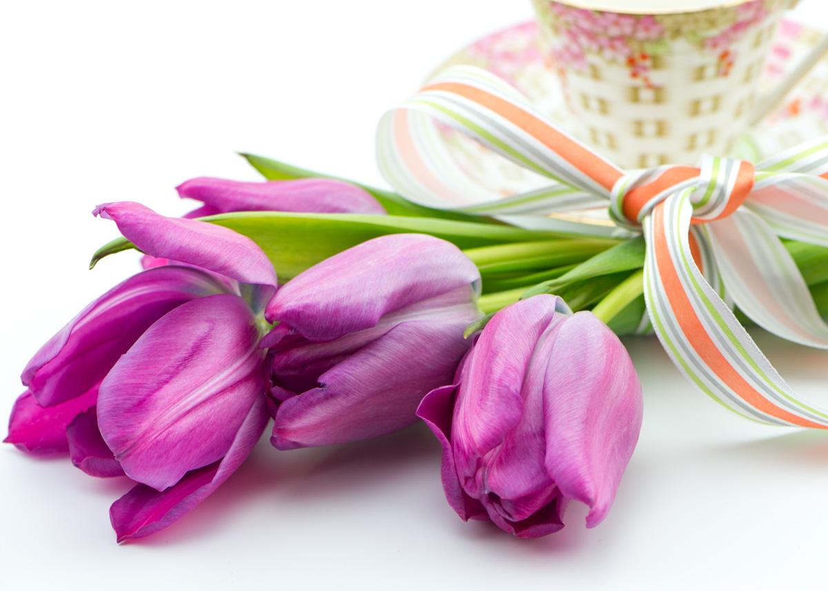 Tulips-9230.jpg