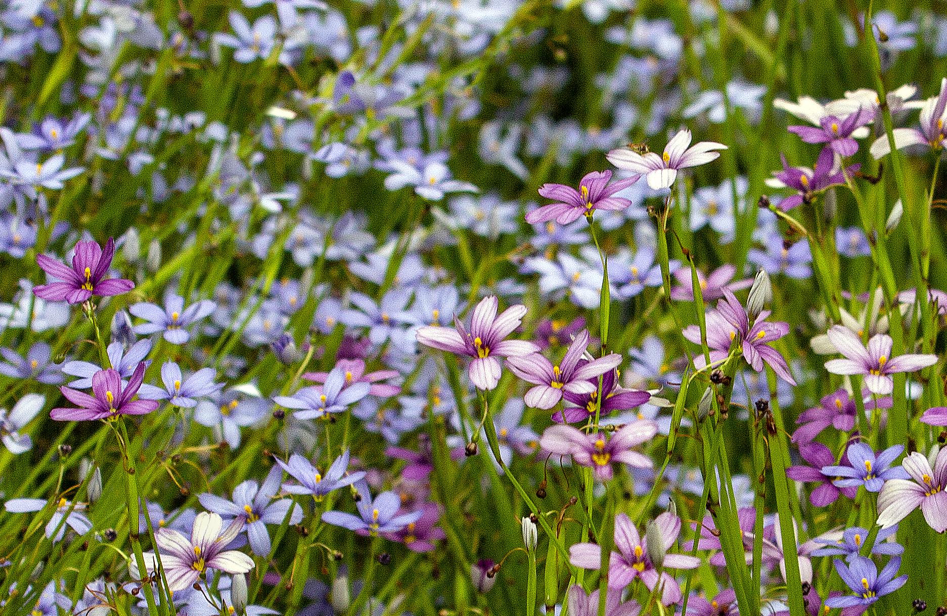 JimSquires_Flowers_1.jpg