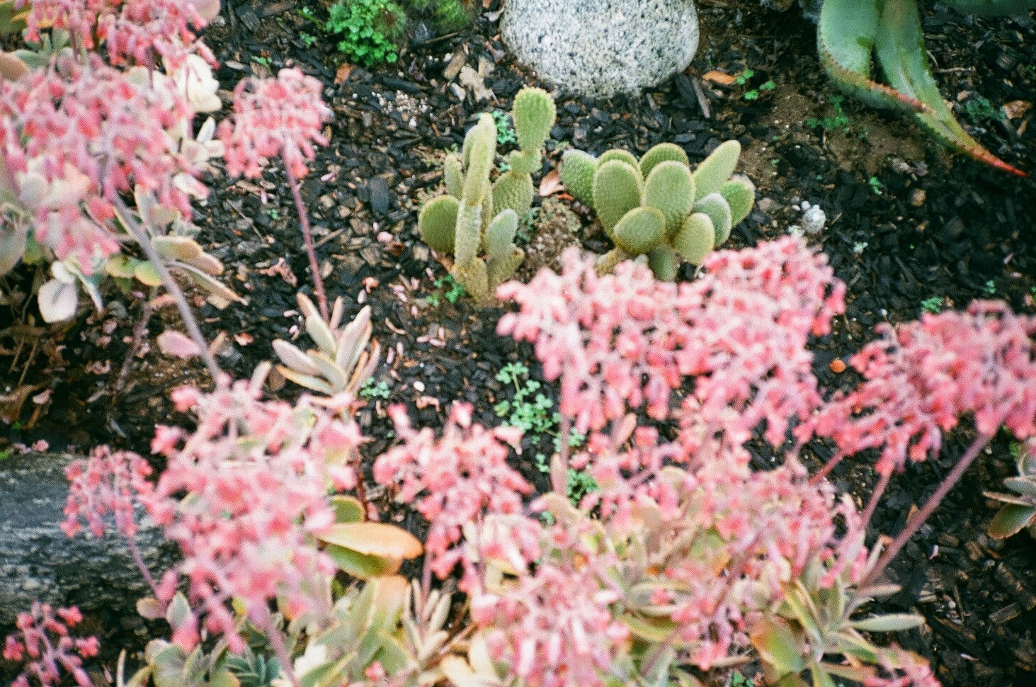 Alhambra, California
