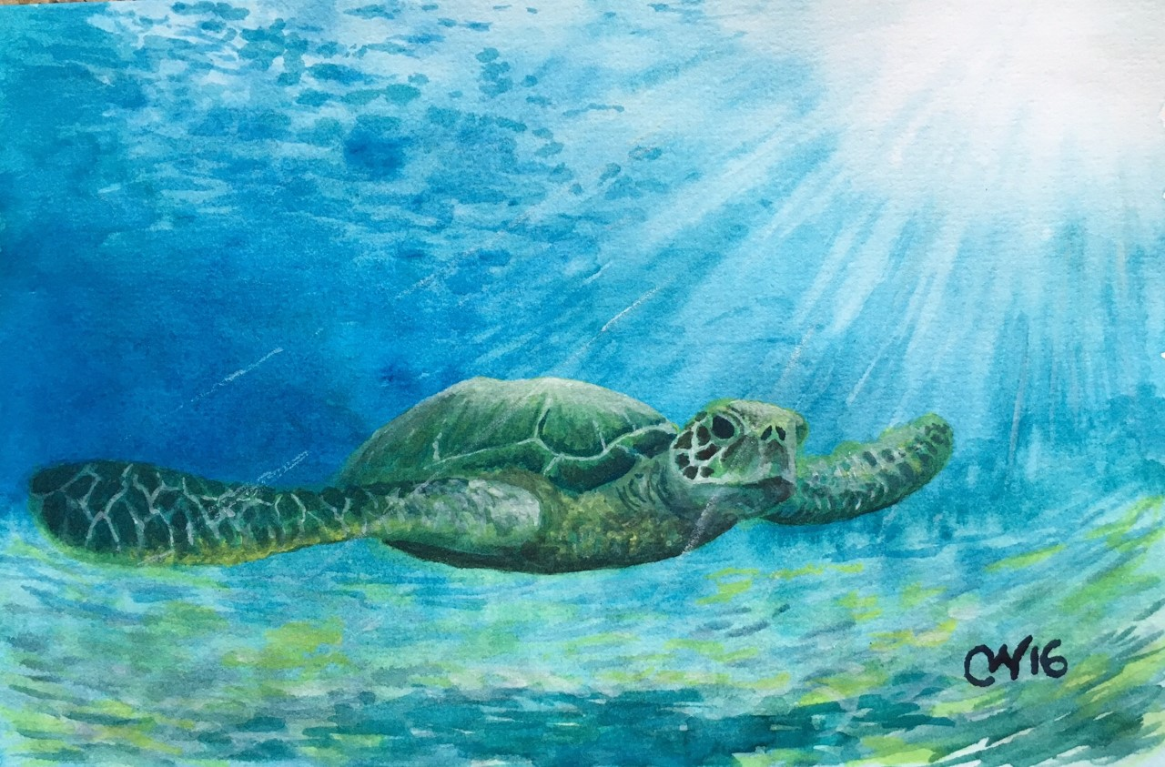 Sea Turtles such as the Hawksbill not only rely on coral reefs, but actually help benefit the corals and other organisms by eating sponges. Original painting: Curtis Whitwam