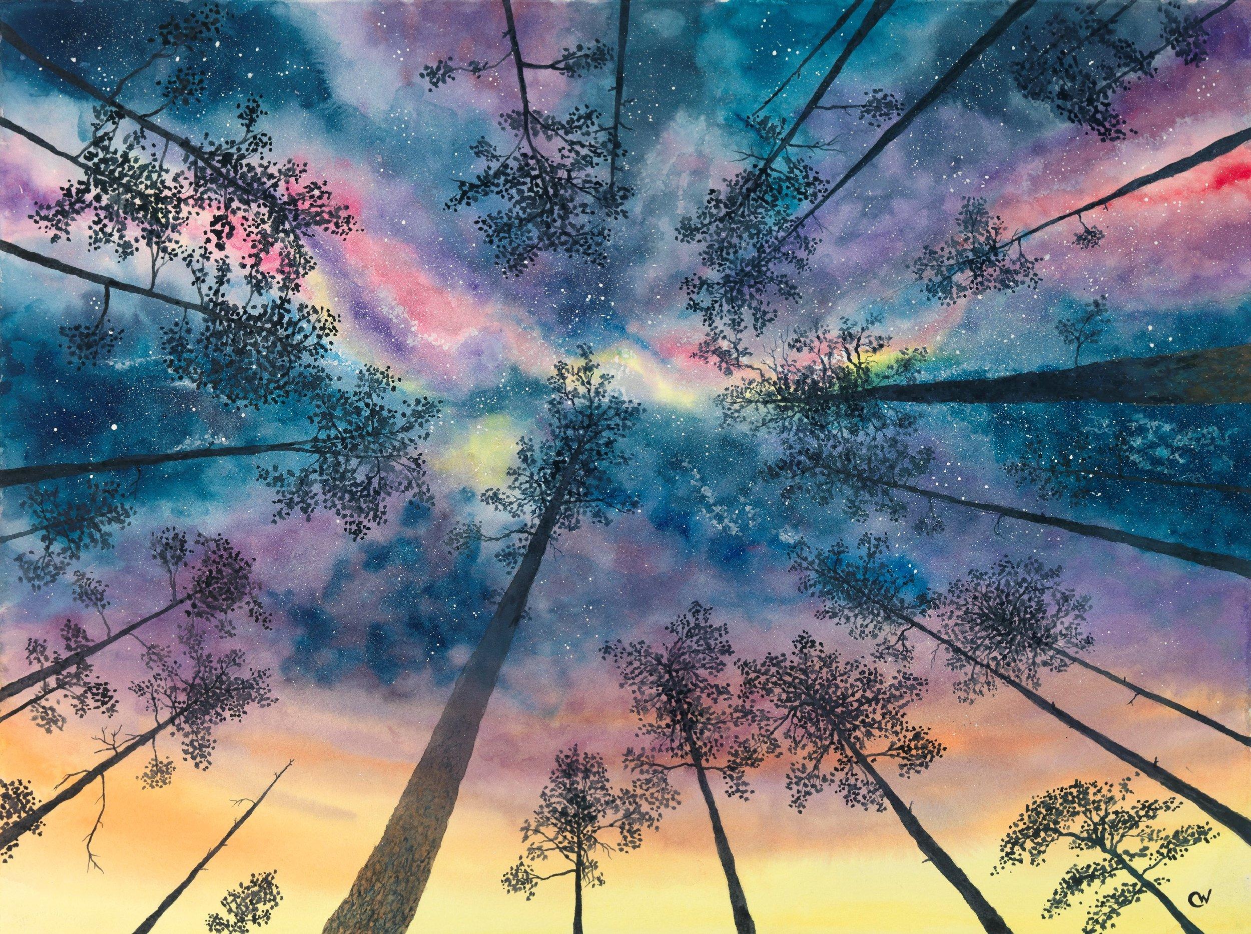 Night Sky in the Pines (75MB).jpg