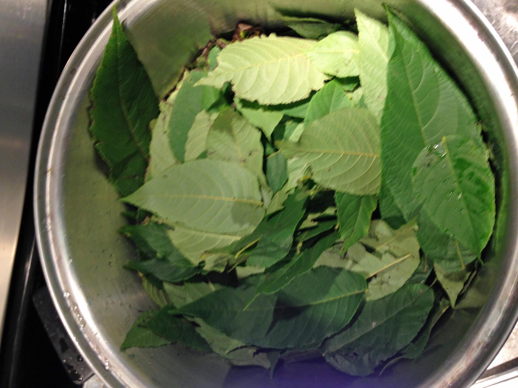 wal leaves.jpg