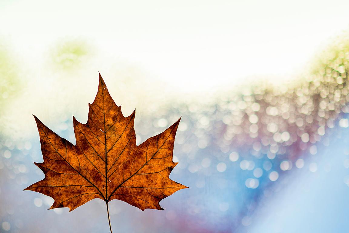 leaf-royaltyfree-sm.jpg