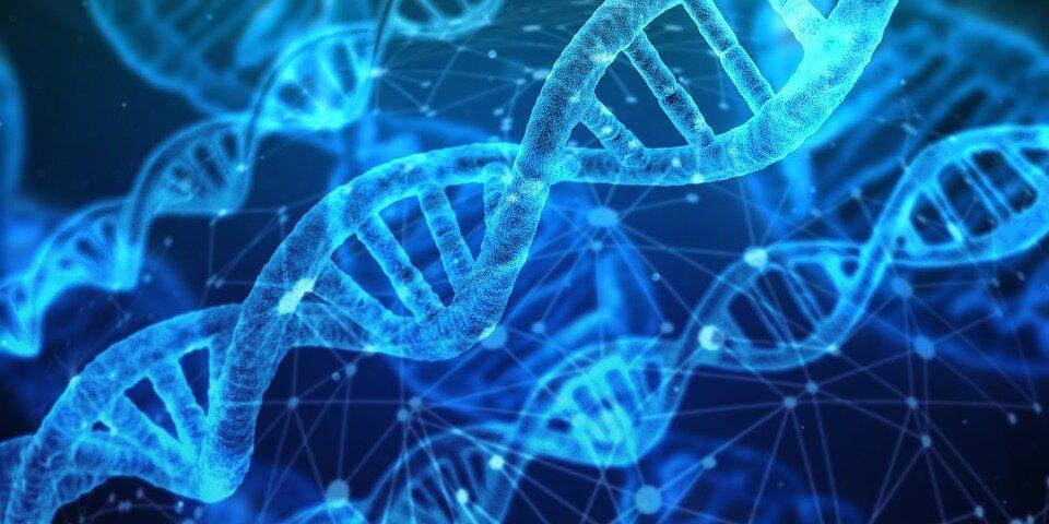 Petri, un nouvel incubateur d'entreprises pour développer des produits biotechnologies