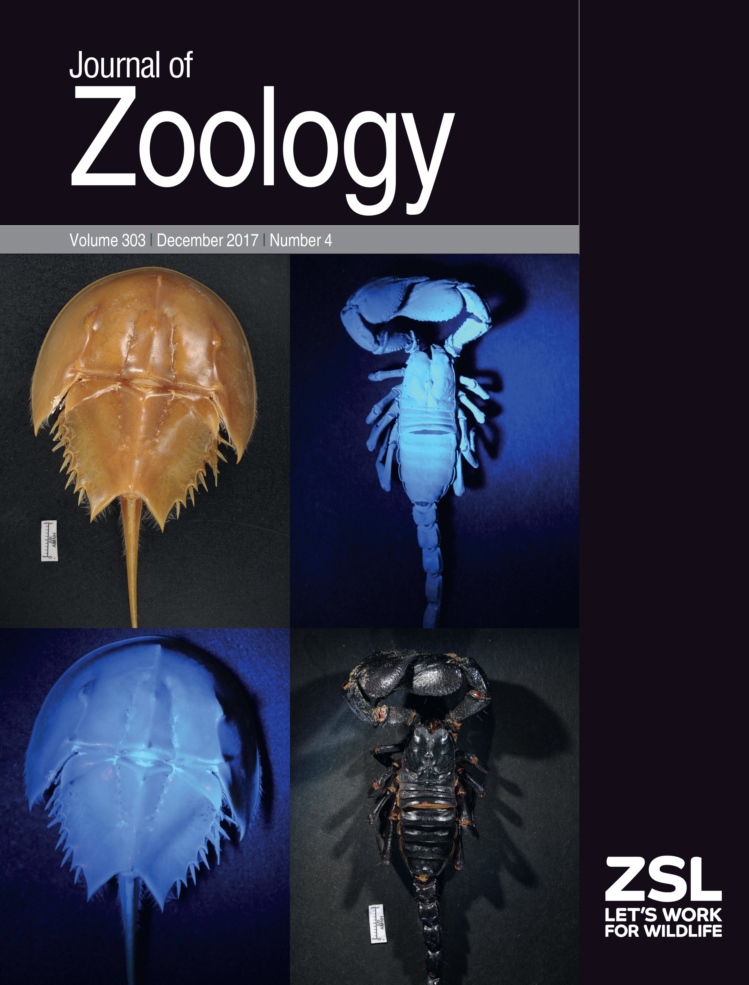 Arachnid cuticle fluorescence on the cover of  Journal of Zoology