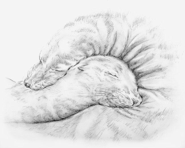 ExtraSpread_Sketch2.jpg