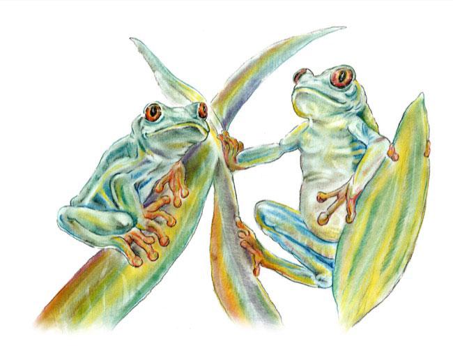 Frogs_drawing.jpg