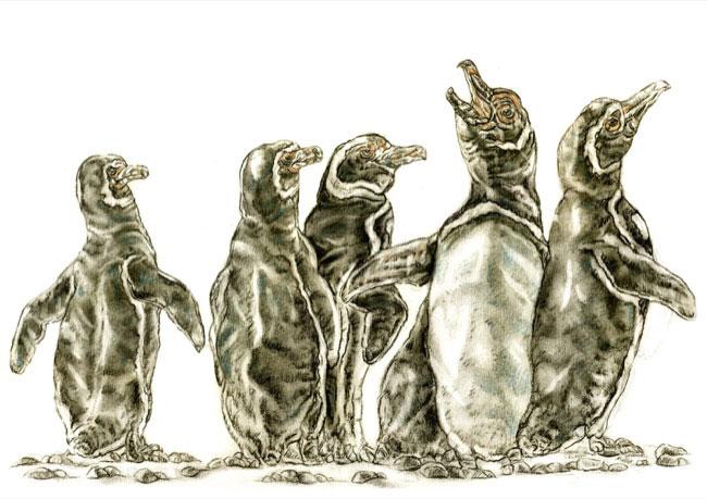 penguins_drawing.jpg