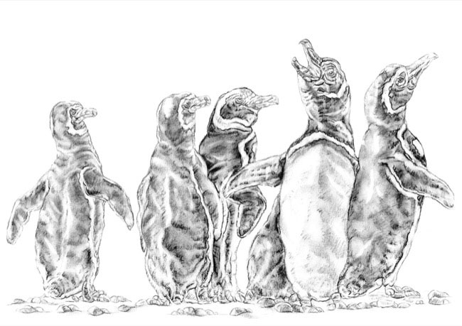 penguinslight_drawing.jpg