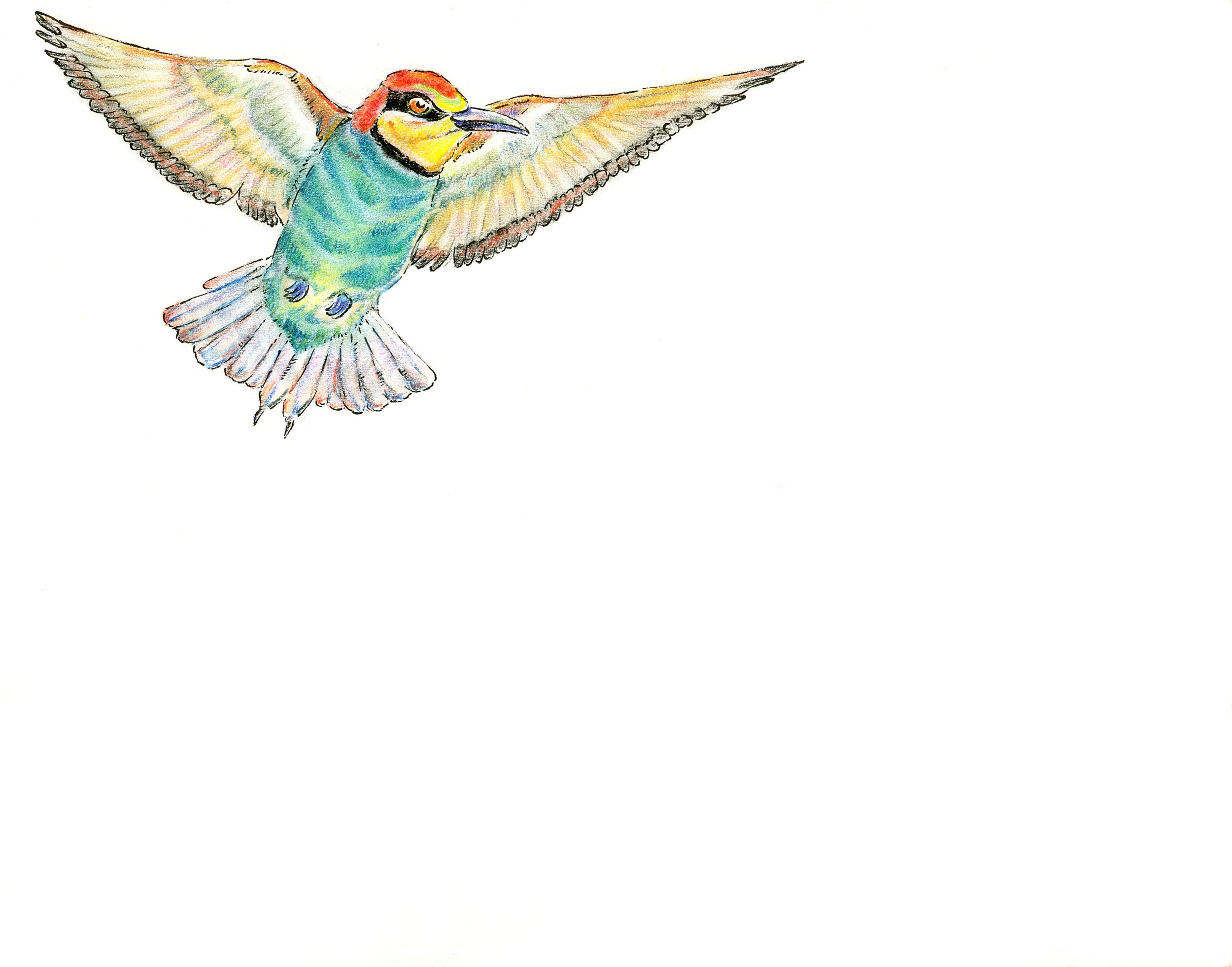 Cover Icon -Bee Eater Spread.jpg