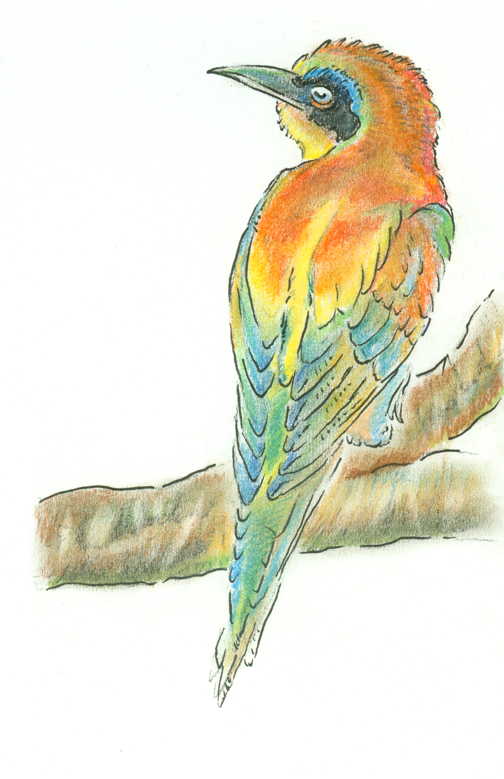 Nov - European Bee Eater.jpg