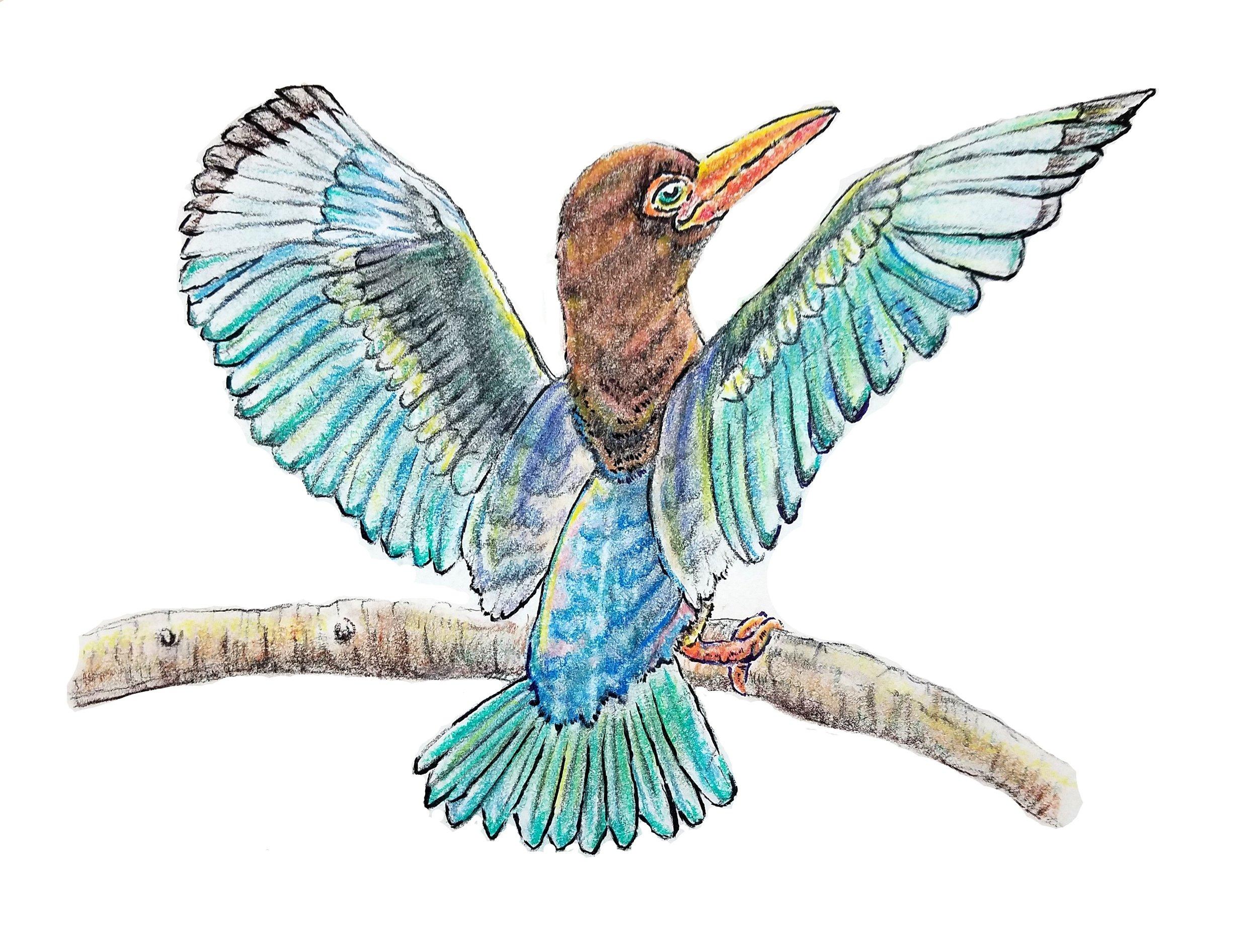 JavanKingfisher.jpg