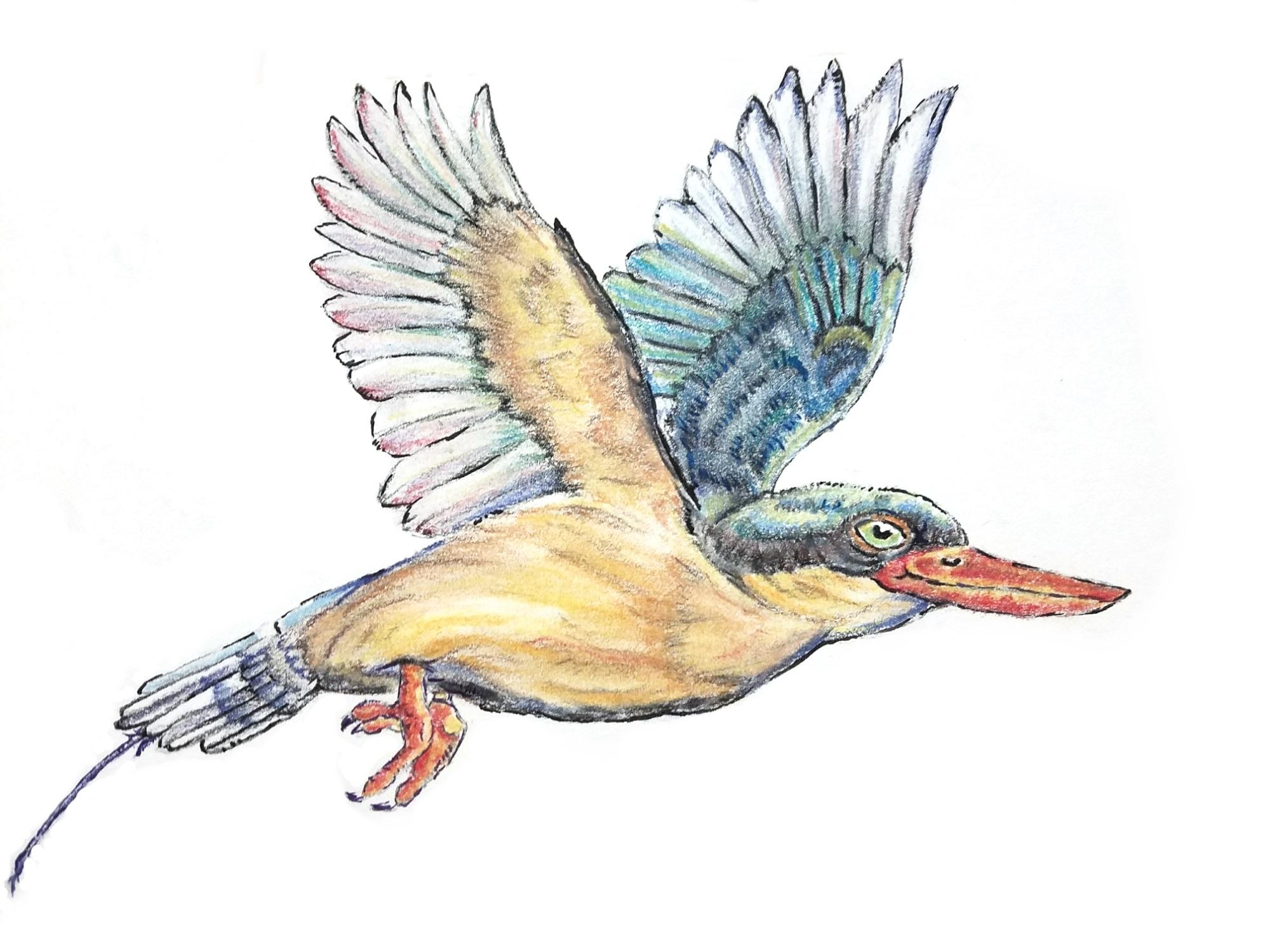 ParadiseKingfisher.jpg