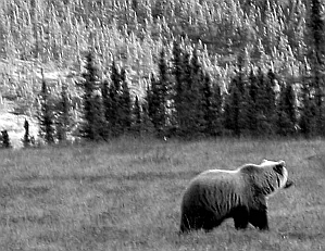 preview-bear.jpg