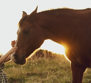 horse-3970041_640.jpg