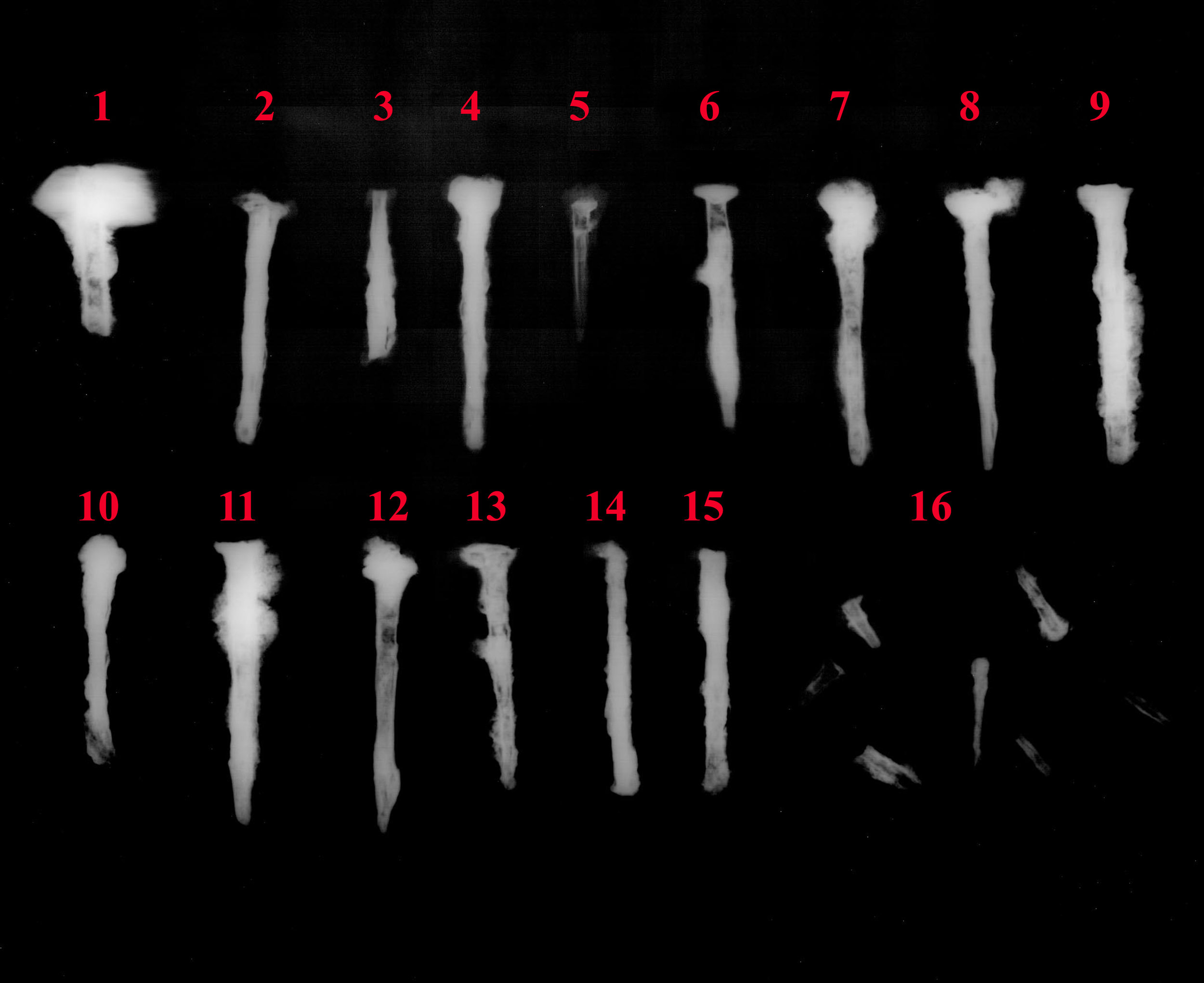 Coffin Nails, Xray @1,5x.jpg