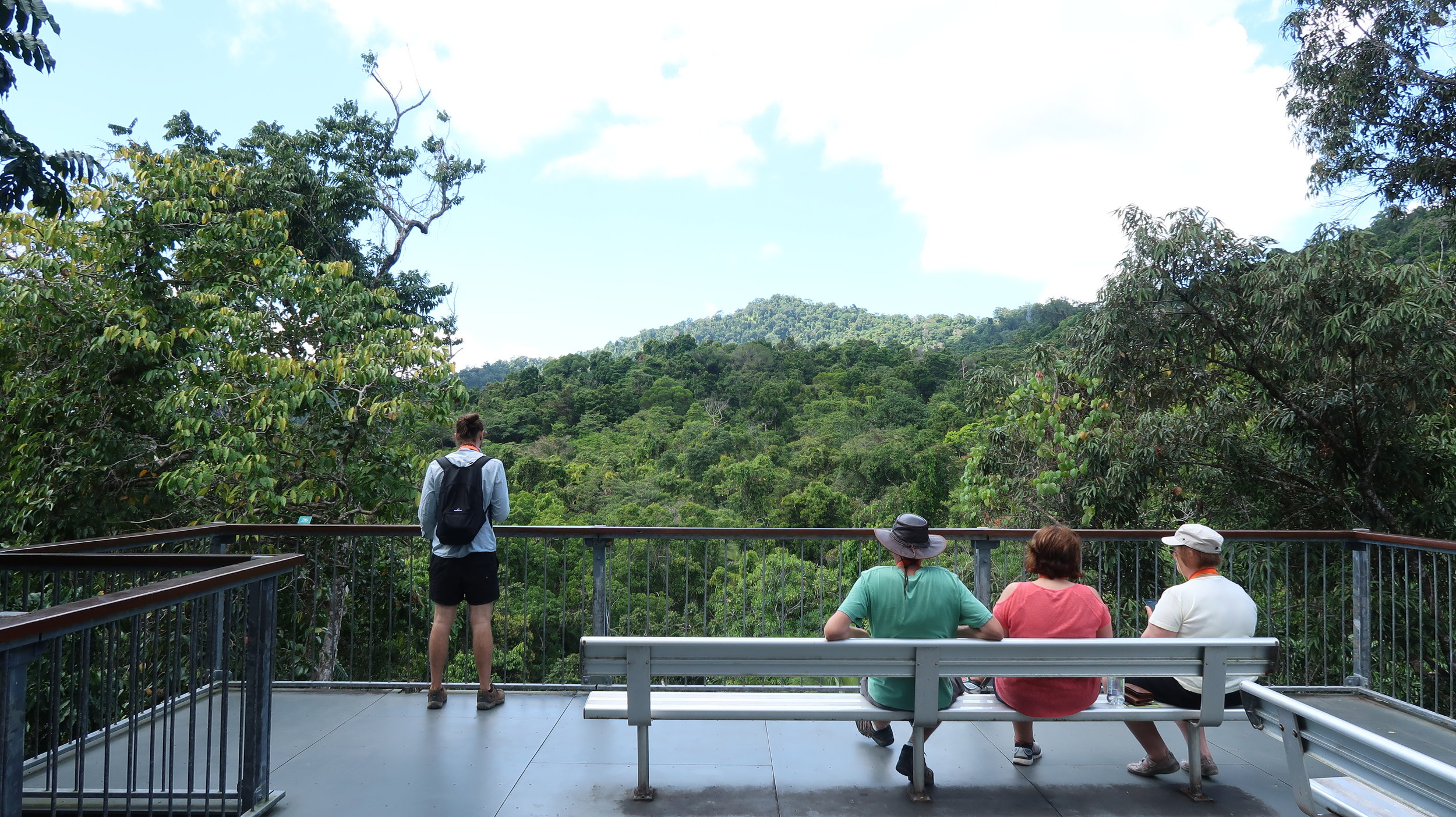 View from the top of Daintree Discovery Centre