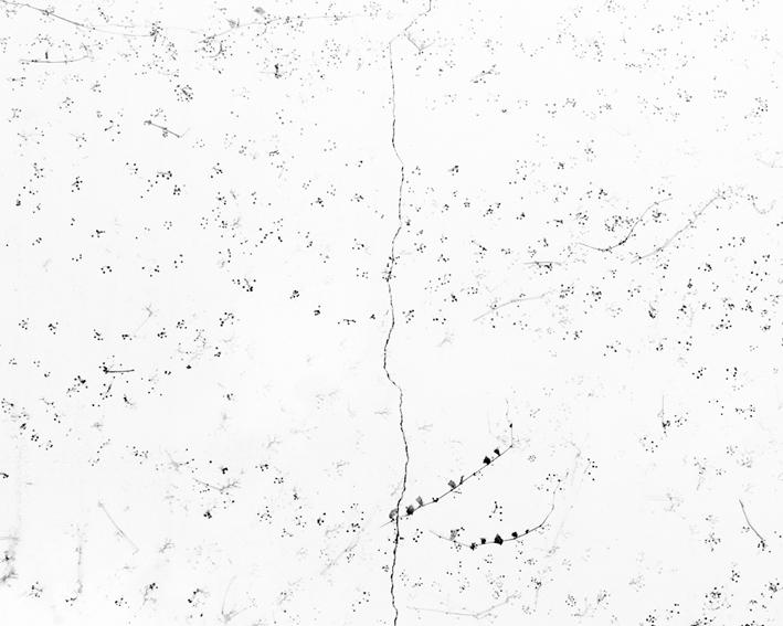 white5.jpg