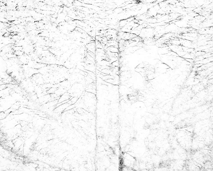 white6.jpg