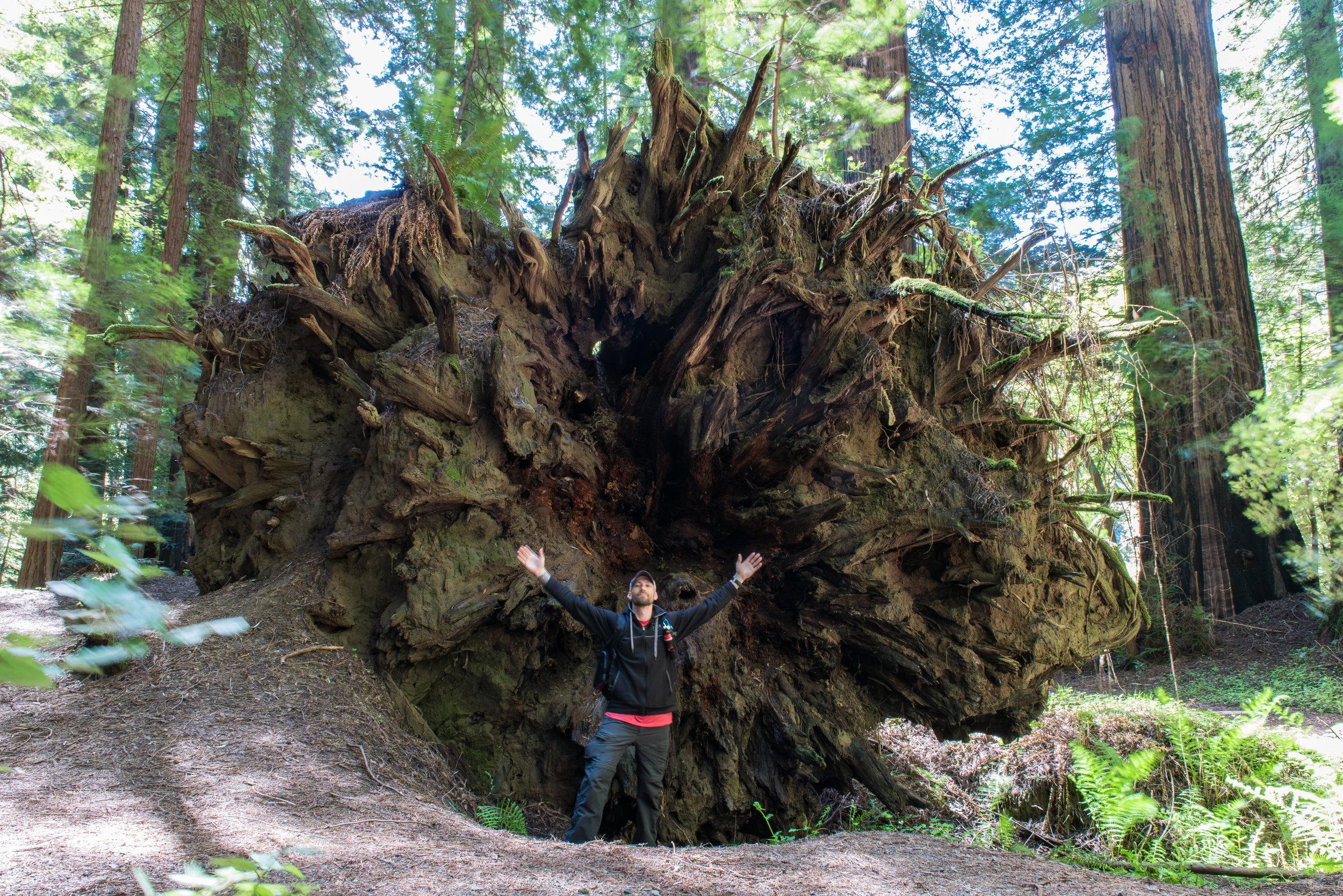 Gigantic Roots
