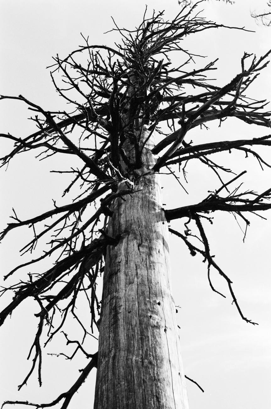 Dead tree on the approach