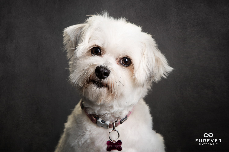 Dog_Portrait_Photographer_15.jpg