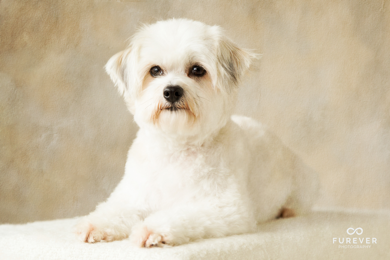 Dog_Portrait_Photographer_19.jpg