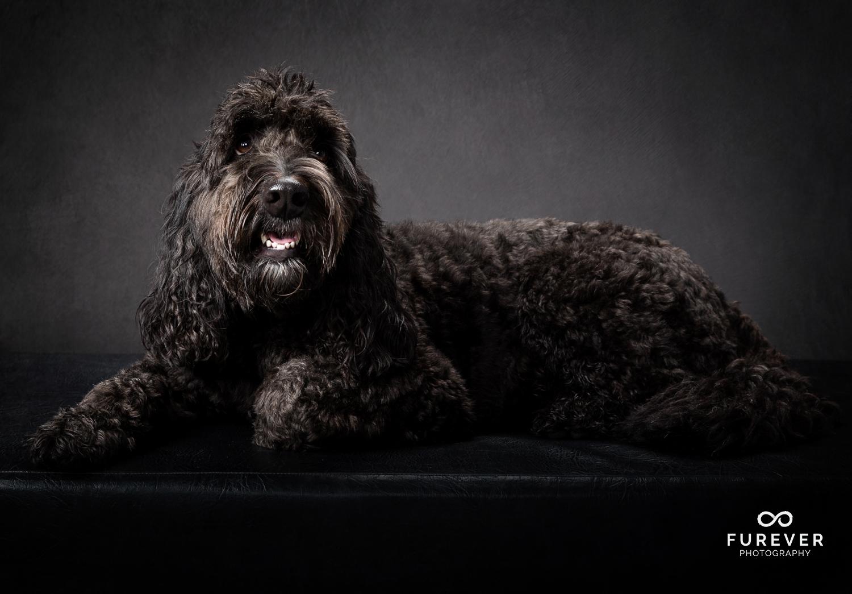 Dog_Portrait_Photographer_20.jpg