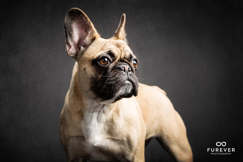 Dog_Portrait_Photographer_21.jpg