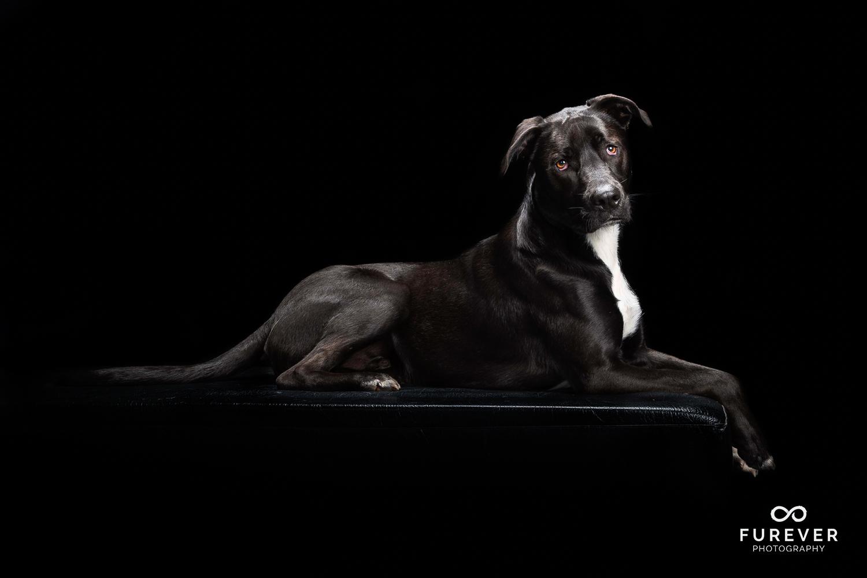 Dog_Portrait_Photographer_23.jpg