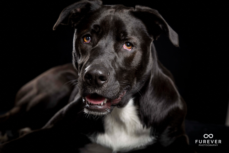 Dog_Portrait_Photographer_24.jpg