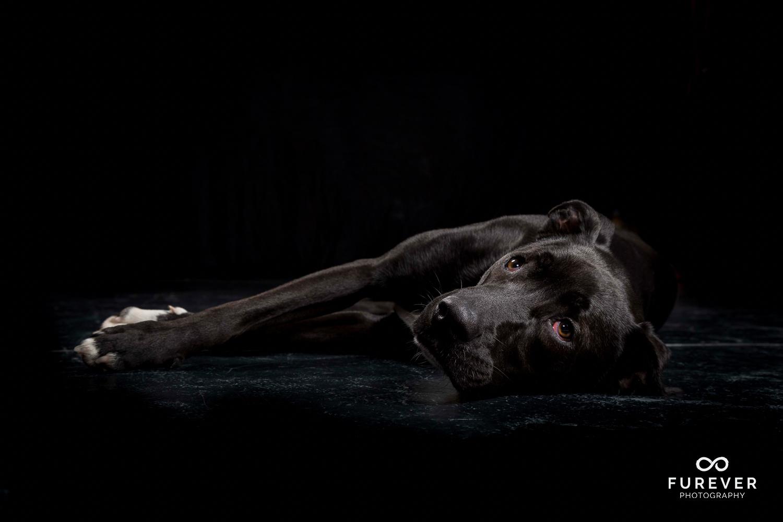 Dog_Portrait_Photographer_26.jpg