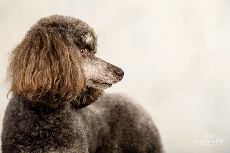 Dog_Portrait_Photographer_28.jpg