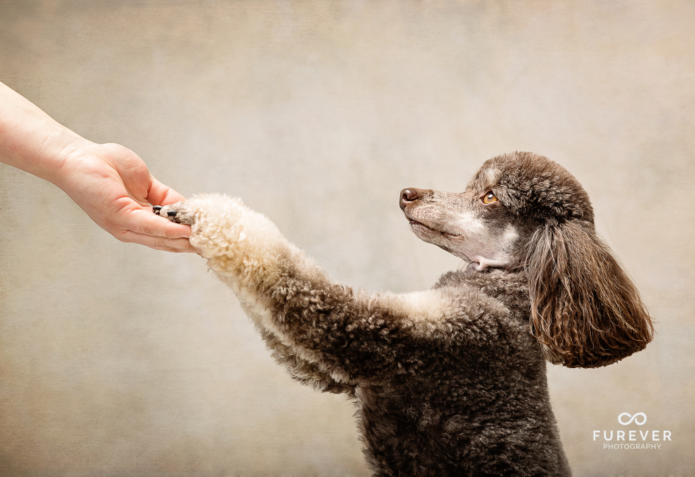 Dog_Portrait_Photographer_27.jpg