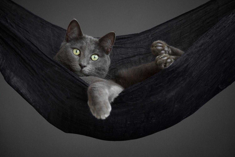Cat Portrait Photographer 14.jpg