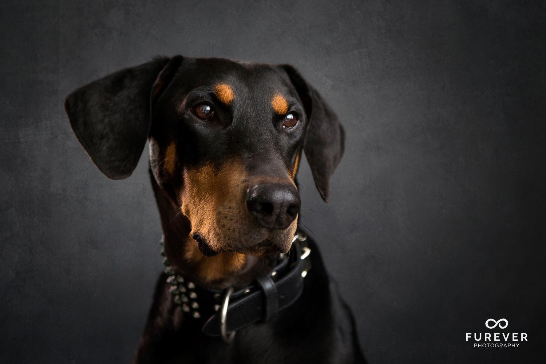 Dog_Portraits_Photographer_04.jpg