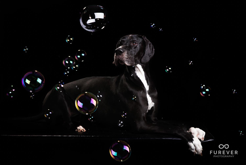 Dog_Portrait_Photographer_12.jpg