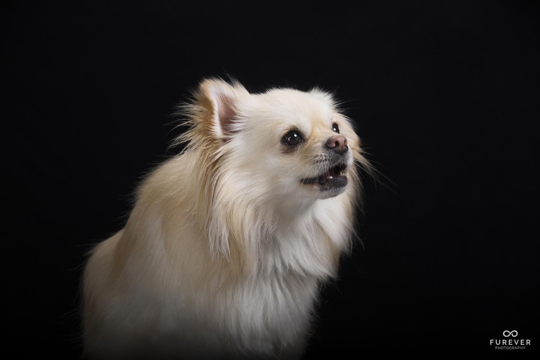 Dog_Portrait_Photographer_49_AC21.jpg