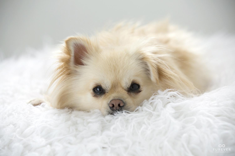 Dog_Portrait_Photographer_50_AC55.jpg