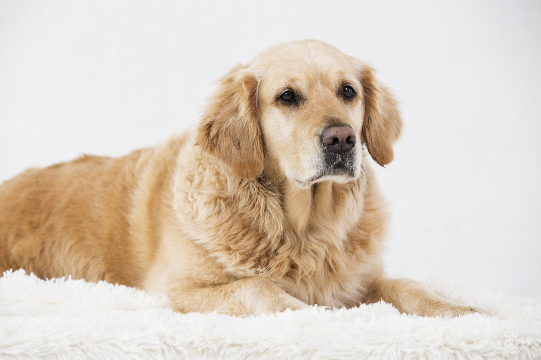 Dog_Portrait_Photographer_52_L&P 055.jpg