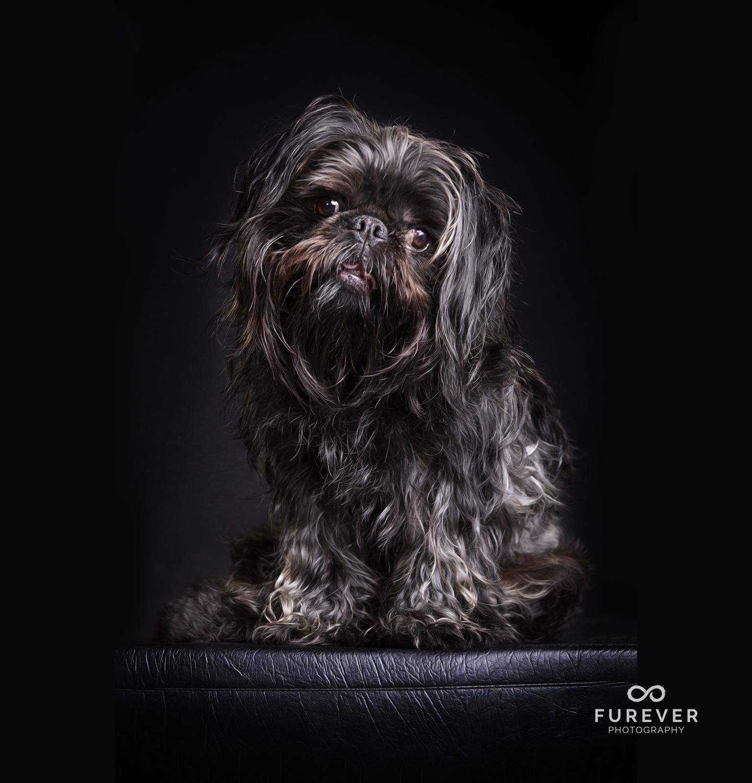Dog_Photographer_Auckland_George.jpg