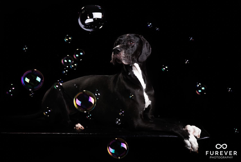 Dog_Portraits_Photographer_13.jpg